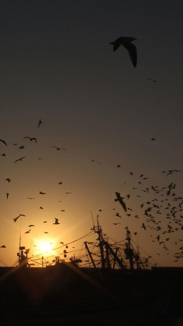 Syzygy: The Gulls