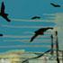 Essaouira Port 1